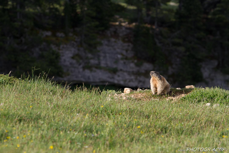 16_Grand Veymont_Marmotte